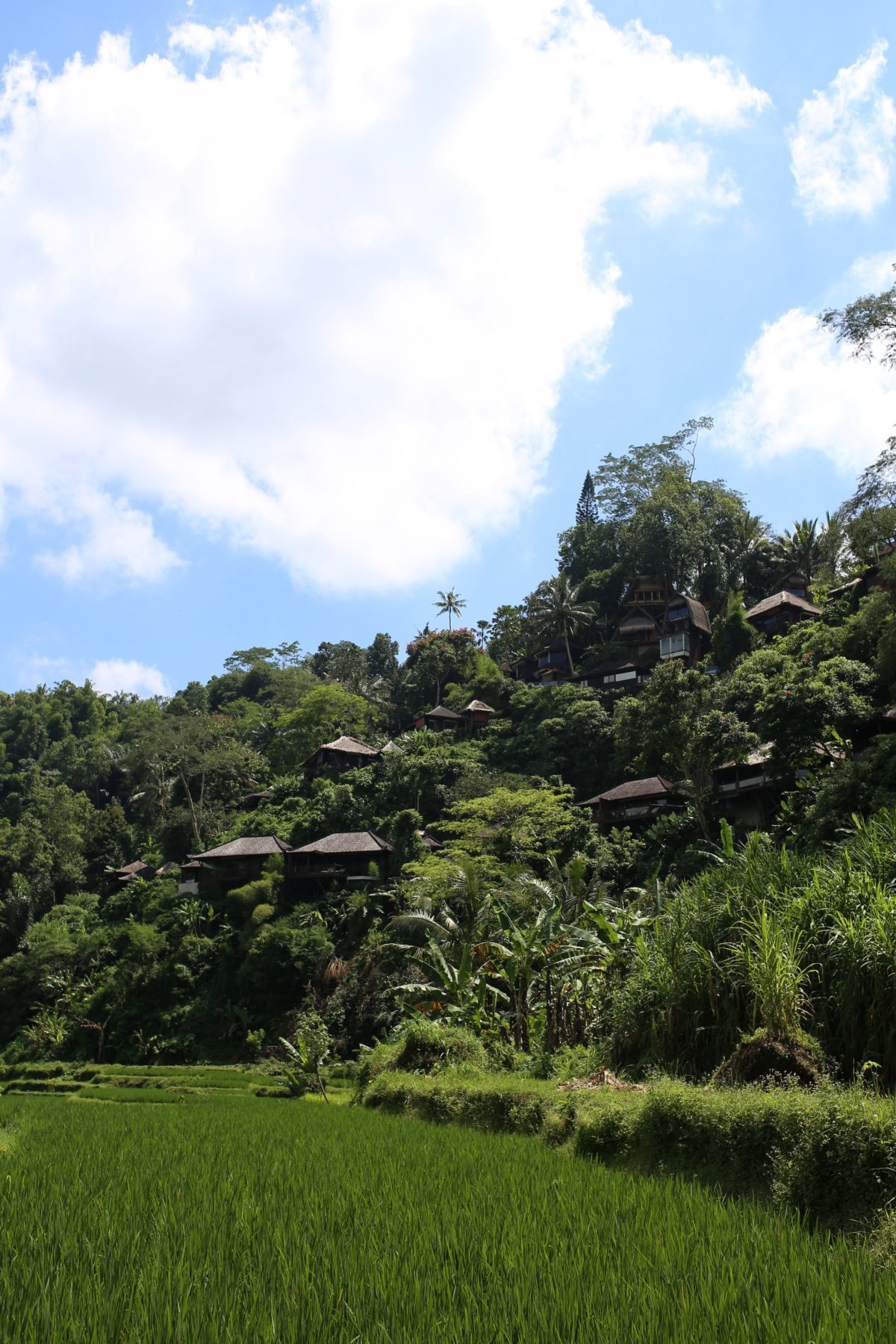 Travel Diary Bali Part 2 - UBUD